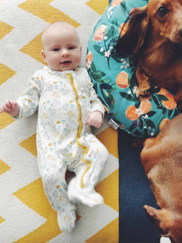 baby with dachshunds